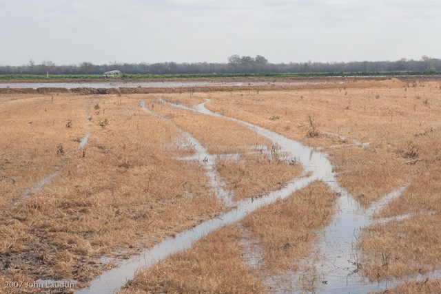 A rice field in late winter.
