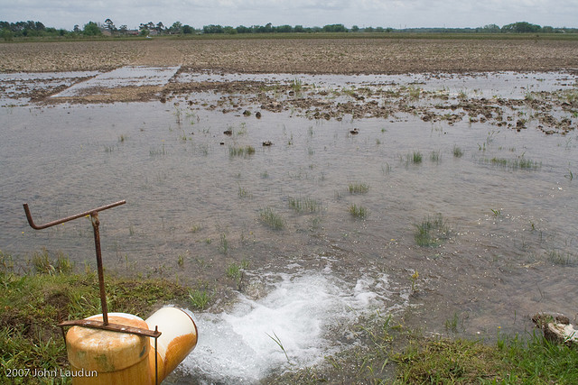 An open riser floods a rice field.