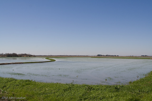 A rice field flooded up in late winter in preparation for being leveled.