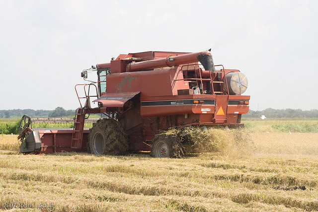 A combine makes its way through a rice field, returning the chaff as it goes.